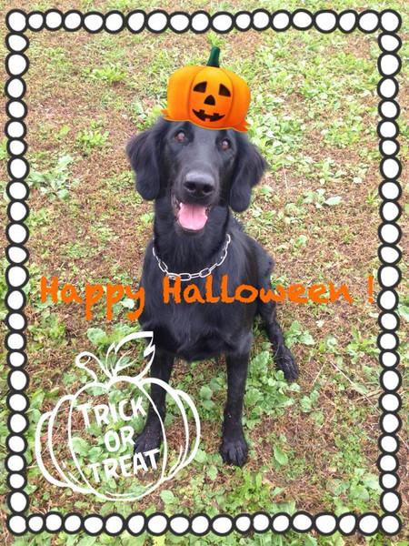 Halloweenmonop